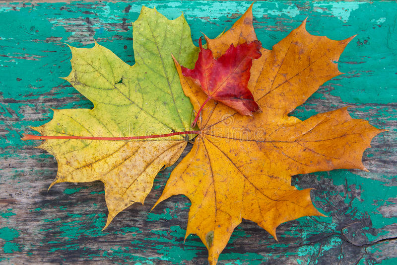 Mehrfarbige Blätter auf einer Holzoberfläche stilisierten unter der Skala stockbild