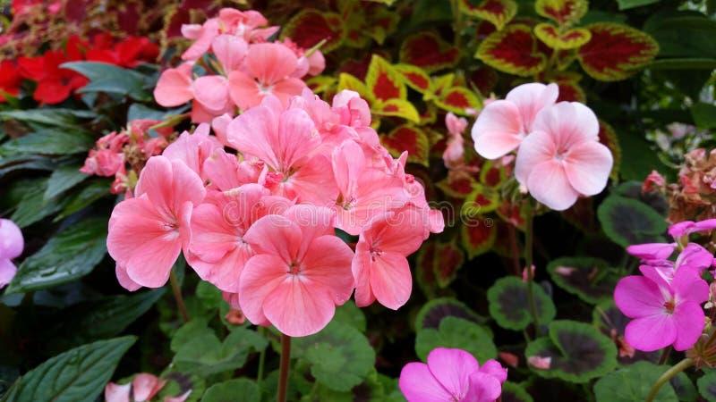 Mehrfarbige Gruppe verschiedene Blumen lizenzfreies stockfoto