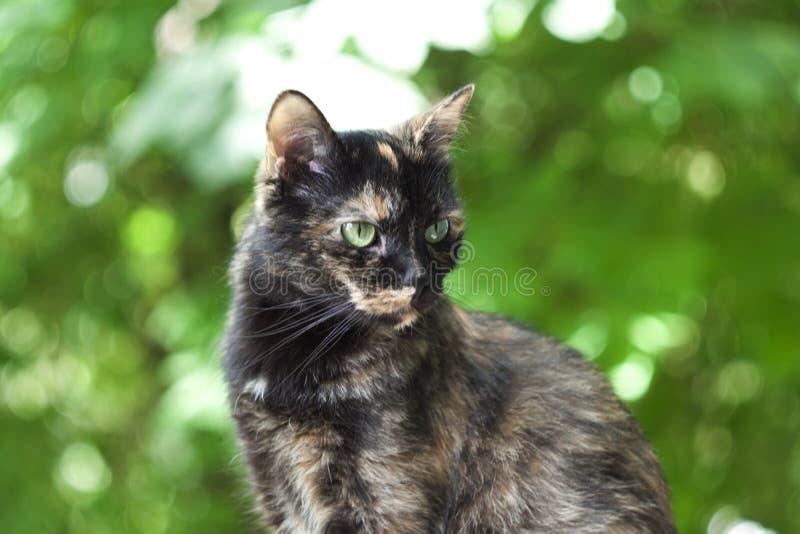 Mehrfarbige Katze auf einem grünen Hintergrund stockfotografie