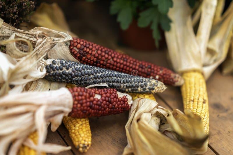 Mehrfarbige Maiskolben mit trockenen Blättern, unterschiedliche Vielzahl, selektiver Fokus, natürlicher Herbsthintergrund stockfotografie