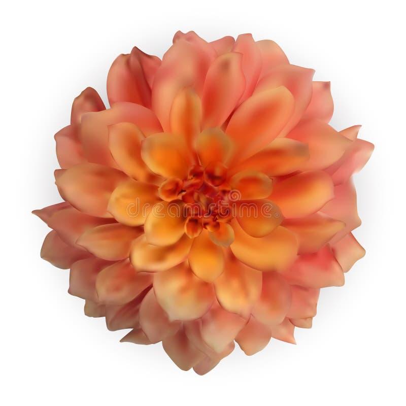 Mehrfarbige naturalistische bunte Dahlie 3D lokalisiert auf weißem Hintergrund Auch im corel abgehobenen Betrag lizenzfreie abbildung