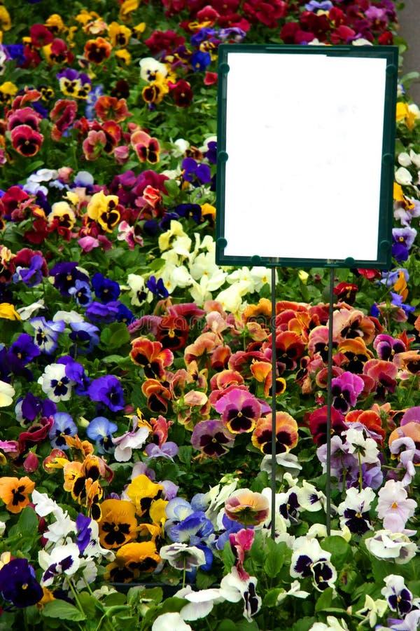 Mehrfarbige Pansies Mit Zeichen Lizenzfreies Stockbild