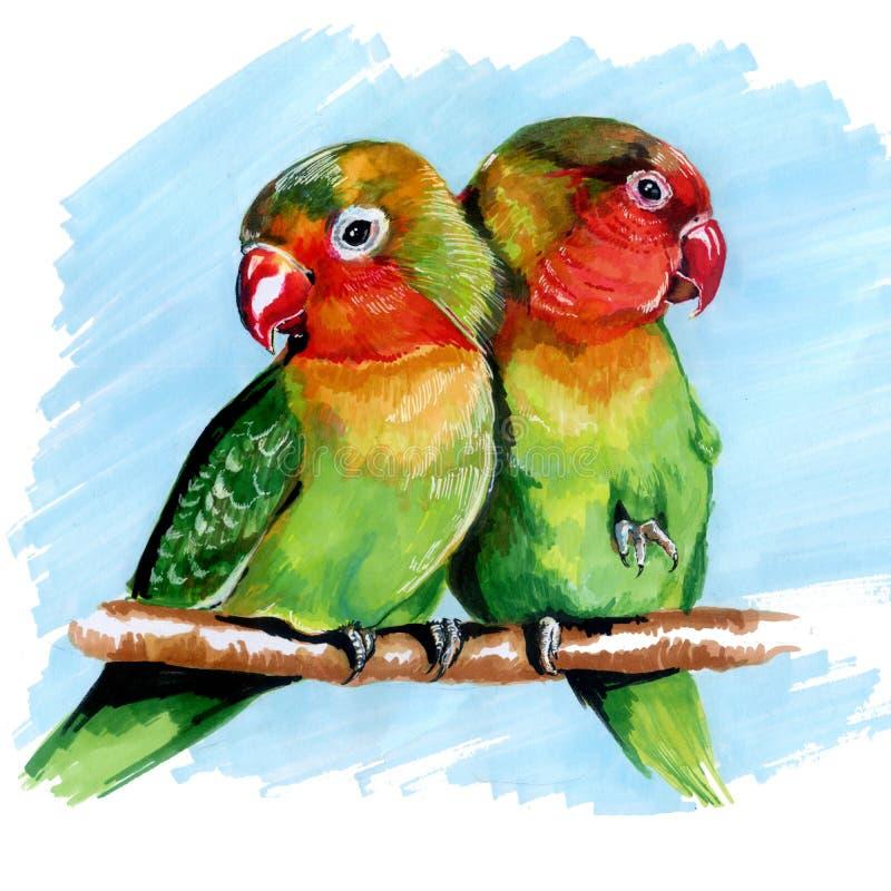 Mehrfarbige Papageienwellensittiche, die Markierungen zeichnen stock abbildung