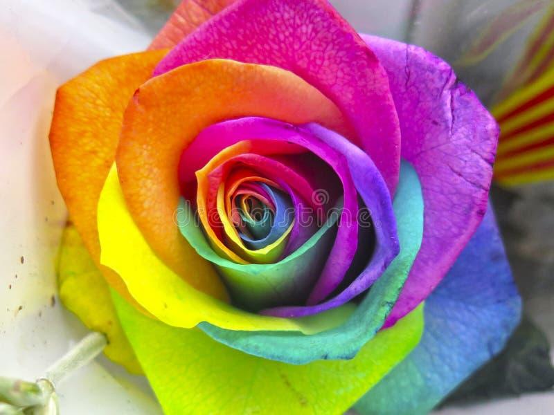 Mehrfarbige Rosen in lebhaften Farben lizenzfreies stockbild
