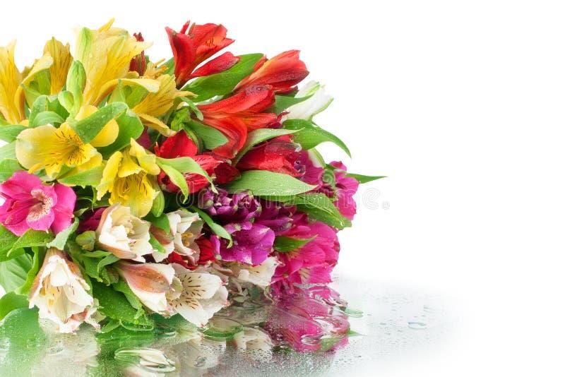 Mehrfarbiger Alstroemeriablumenblumenstrauß auf dem weißen Spiegelhintergrund in den Wassertropfen nah oben lokalisiert lizenzfreies stockfoto