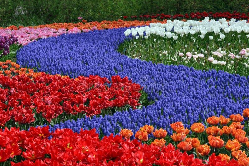 Mehrfarbiger Blumenteppich stockfotografie
