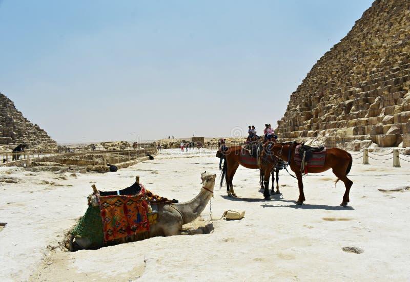 6 mei, 2019 De piramides van Giza, Ka?ro, Egypte royalty-vrije stock foto's