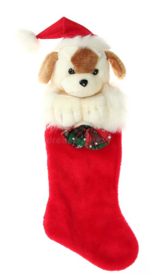 Meia do Natal com cão fotos de stock