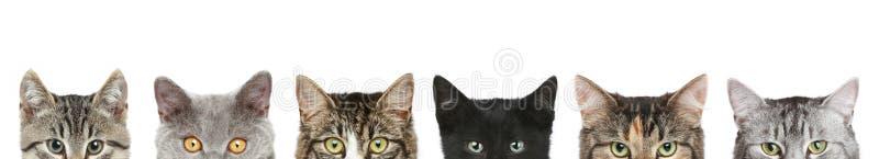 Meias cabeças do gato em um fundo branco imagens de stock