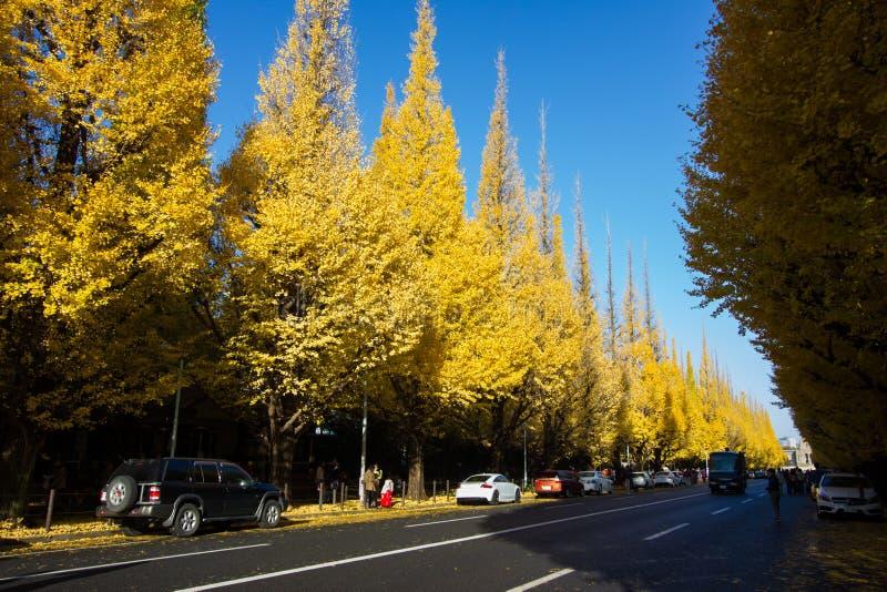 Meiji-jingu Gaien Park`s Ginkgo Avenue stock images