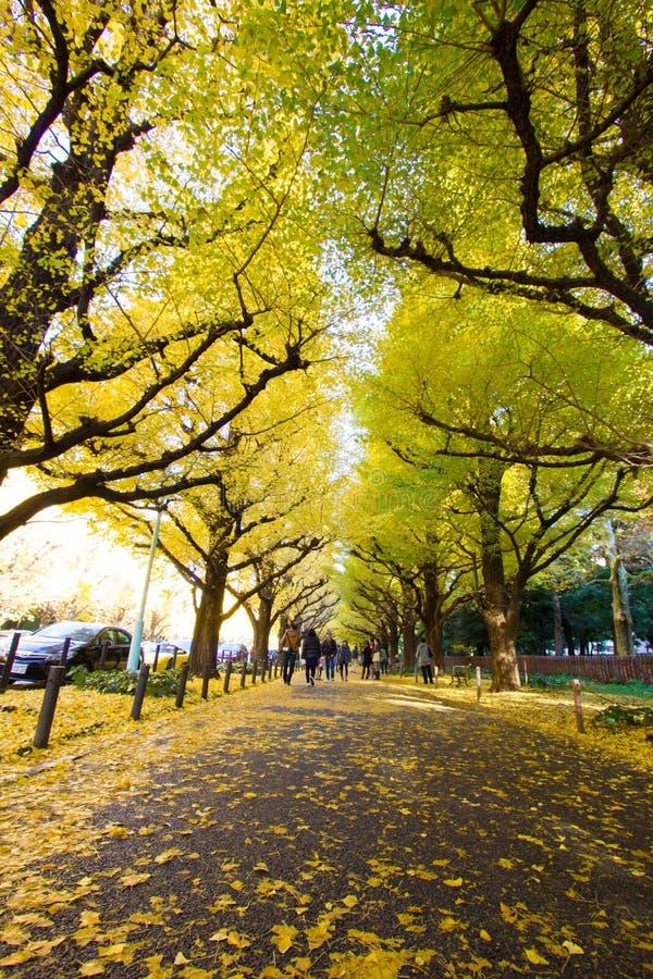 Meiji-jingu Gaien Park`s Ginkgo Avenue stock image