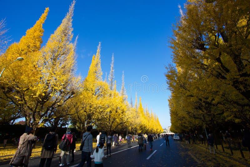 Meiji-jingu Gaien parkerar Ginkgoavenyn för ` s royaltyfri fotografi