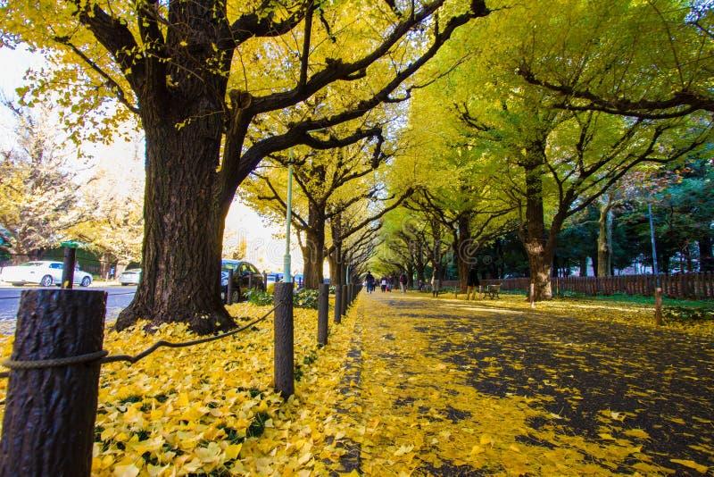 Meiji-jingu Gaien parkerar Ginkgoavenyn för ` s royaltyfria foton