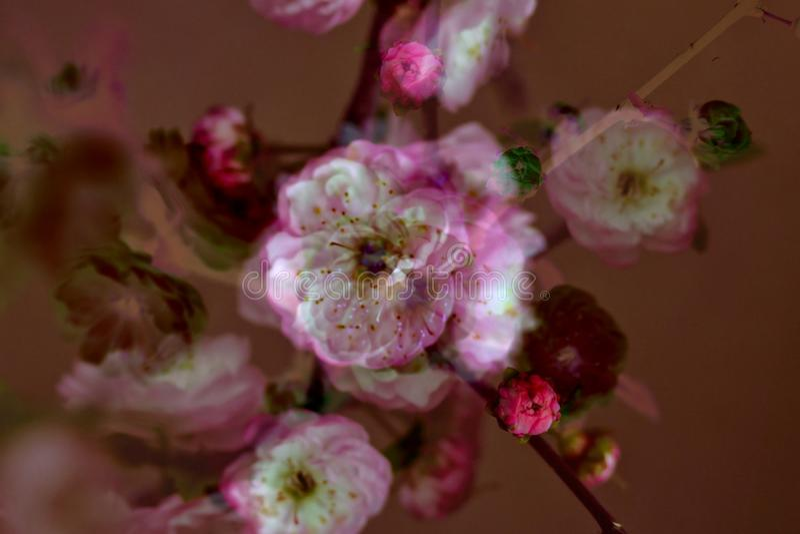 Mein Blumenhintergrund hargita Otto lizenzfreies stockfoto