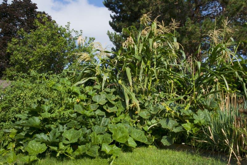 Mein Garten lizenzfreies stockbild