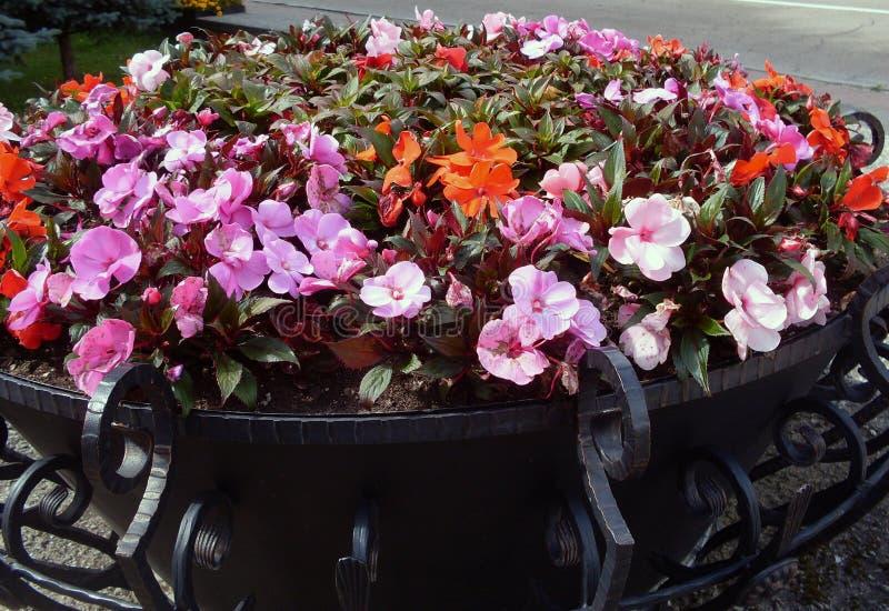 Mein Garten Meine Blumen Eine wunderbare Welt der Fantasie stockbild