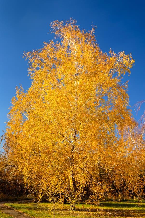 Mein goldener Herbst lizenzfreie stockfotos