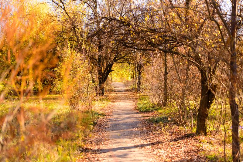 Mein goldener Herbst stockfotografie