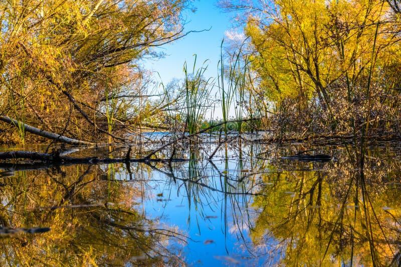 Mein goldener Herbst lizenzfreies stockbild