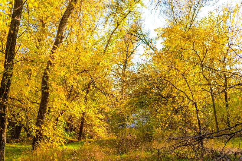 Mein goldener Herbst lizenzfreie stockfotografie