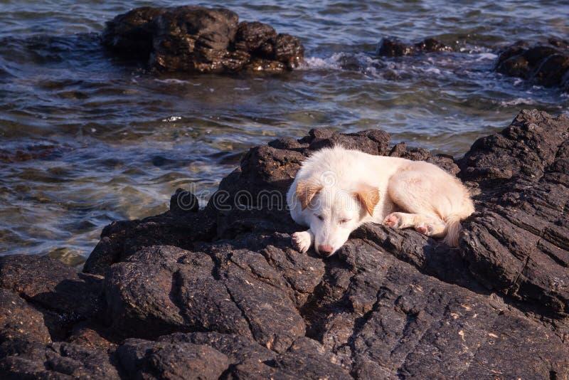 Mein Hund ist auf den Felsen und dem Strand lizenzfreies stockfoto