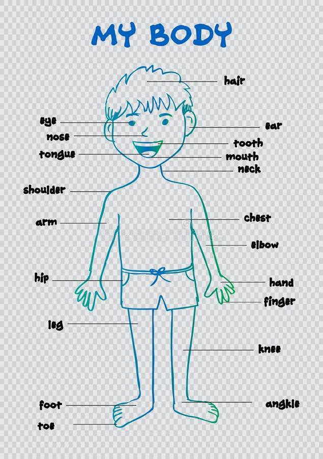 Mein Körper `, Grafisches Diagramm Der Pädagogischen Informationen ...