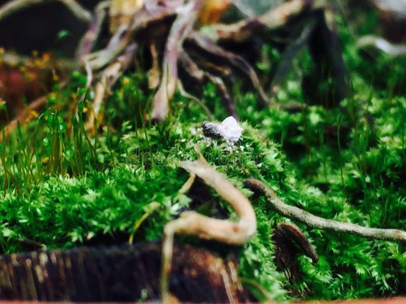 Mein kleiner Garten lizenzfreie stockfotos