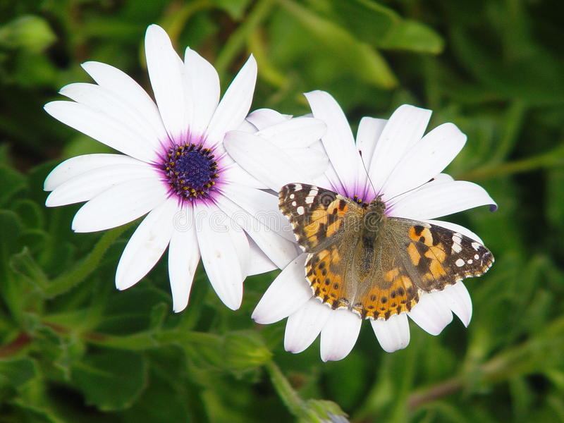 Mein kleiner Schmetterling lizenzfreie stockfotografie