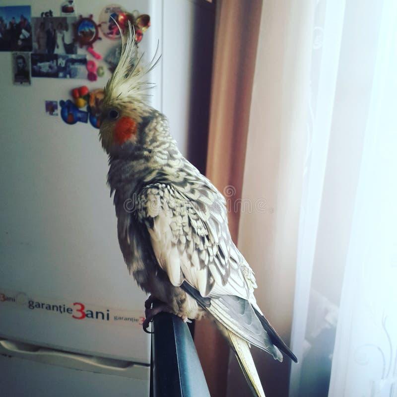 Mein lieber Vogel stockfoto