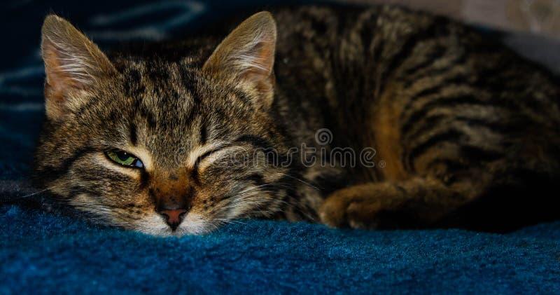 Mein Pussycat lizenzfreies stockfoto