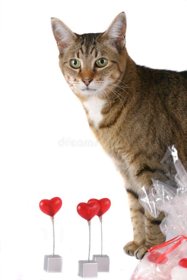 Mein süßer Valentinsgruß lizenzfreie stockbilder