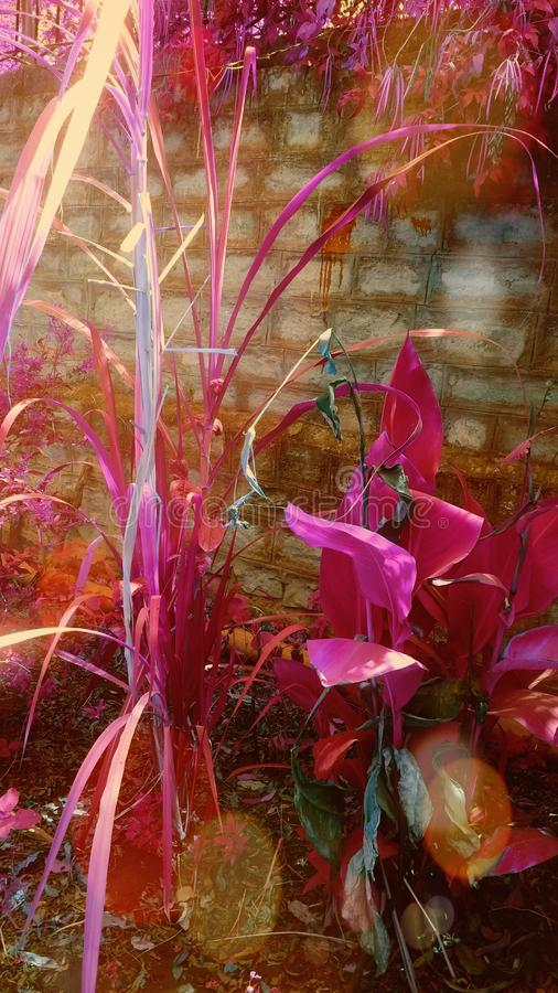 Mein schönes Gartenbild von Blumen lizenzfreies stockbild