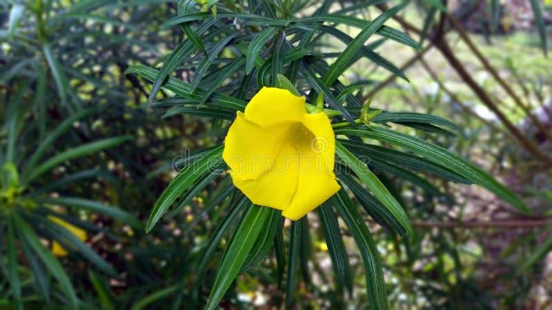 Meine gelbe Bell lizenzfreies stockfoto