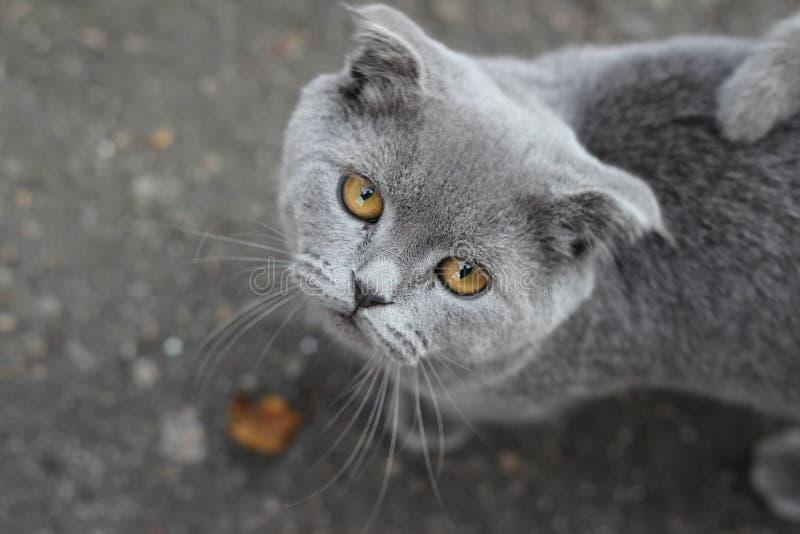 Meine graue Katze lizenzfreie stockfotos