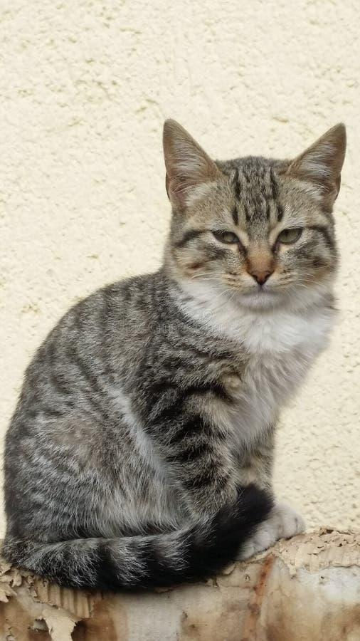 Meine Katze lizenzfreies stockfoto