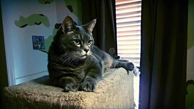 Meine Katze Toby lizenzfreie stockfotografie