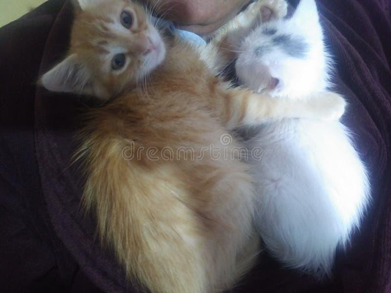 Meine Katzen lizenzfreie stockbilder