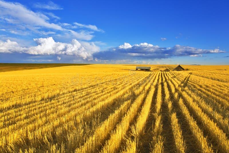 Meio-dia em campos de Montana fotos de stock royalty free