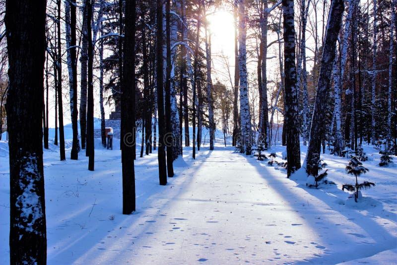 Meio-dia Sun em Sibéria ocidental imagem de stock