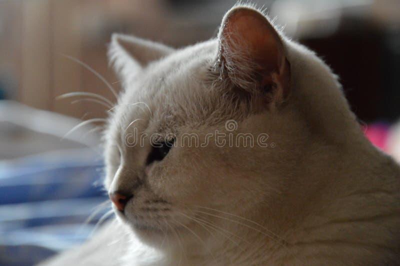 Meio gato do sono imagens de stock