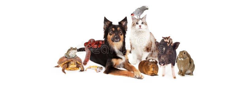 Meios feitos sob medida do Social das FO do animal de estimação grupo doméstico imagens de stock
