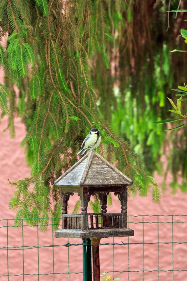 Meise Gesetzt Auf Ihr Holzhaus Lizenzfreies Stockbild