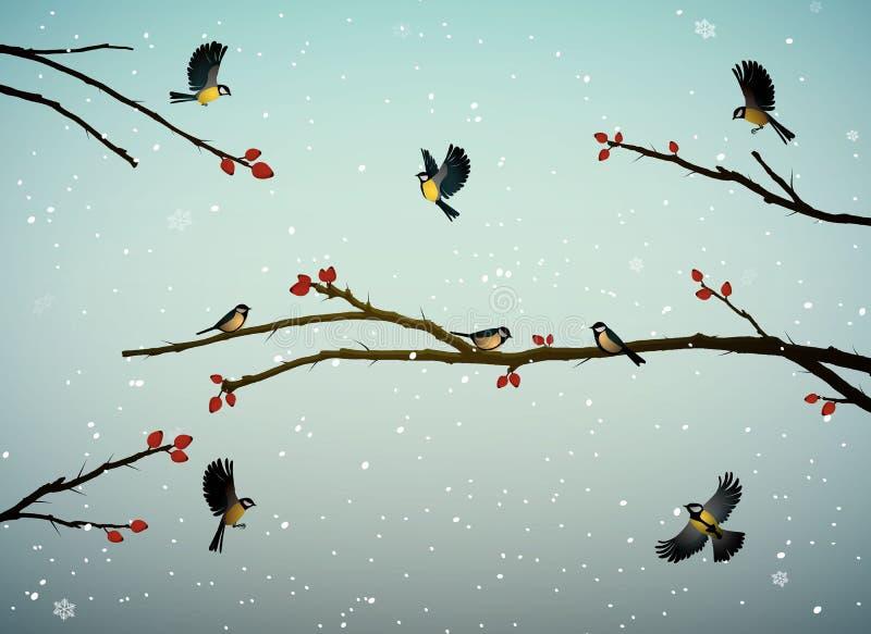 Meisevögel auf dem Hundrosenbaumast in der Wintersaison, Familie von Vögeln in der schneebedeckten Kälte ob, stock abbildung