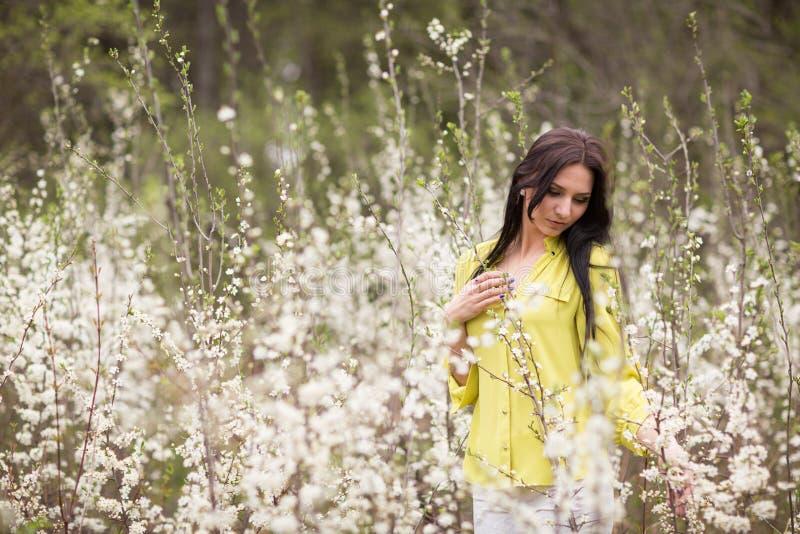 Meisje in bloemen van kers stock foto's