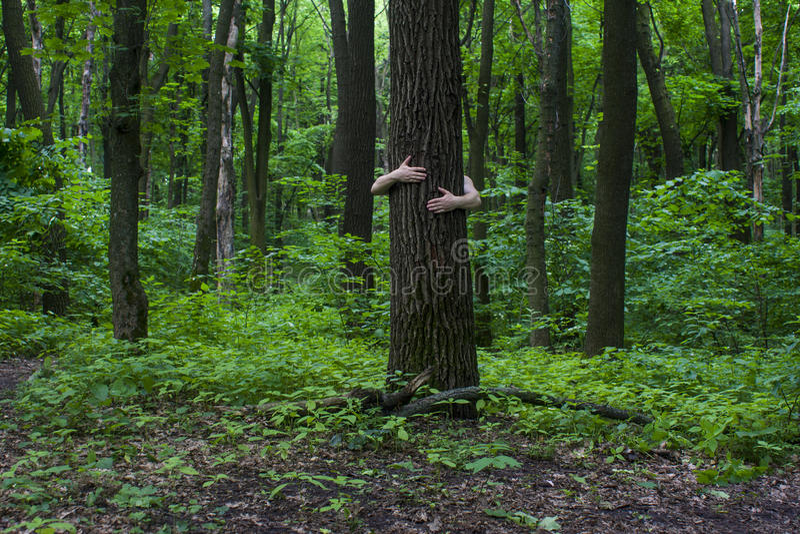 Meisje dat boom koestert Close-up van handen die boom a koesteren stock afbeelding