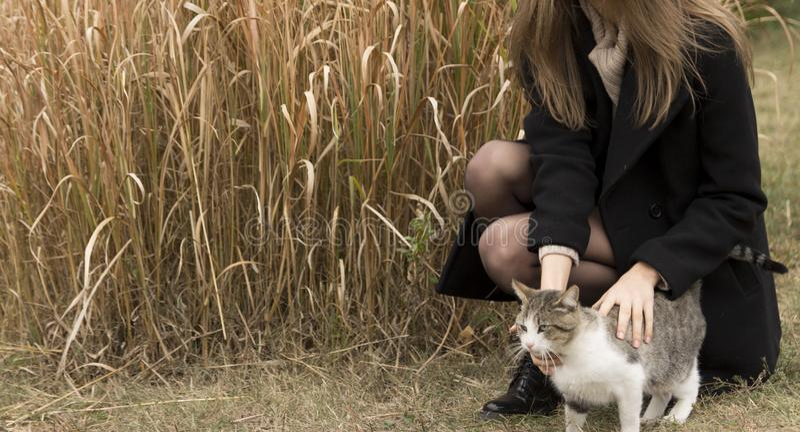 Meisje dat een kat strijkt royalty-vrije stock afbeelding