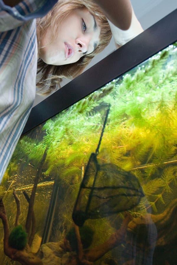 Meisje dat vissen in aquarium vangt stock foto's