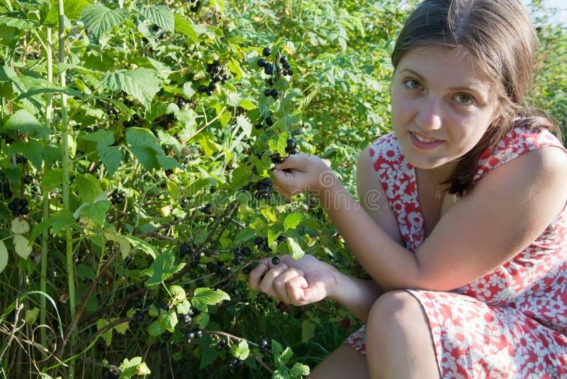 Meisje dat zwarte bes op het gebied plukt stock foto's