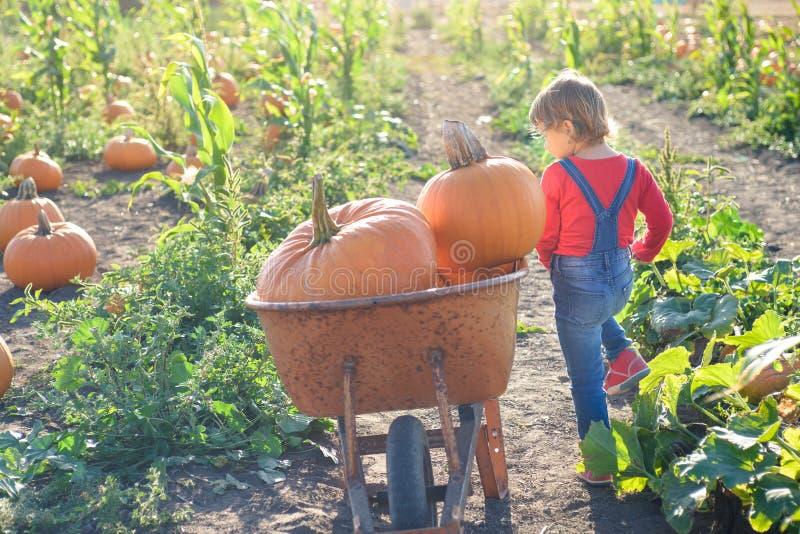 Meisje dichtbij kar met pompoenen bij het flard van het landbouwbedrijfgebied stock fotografie