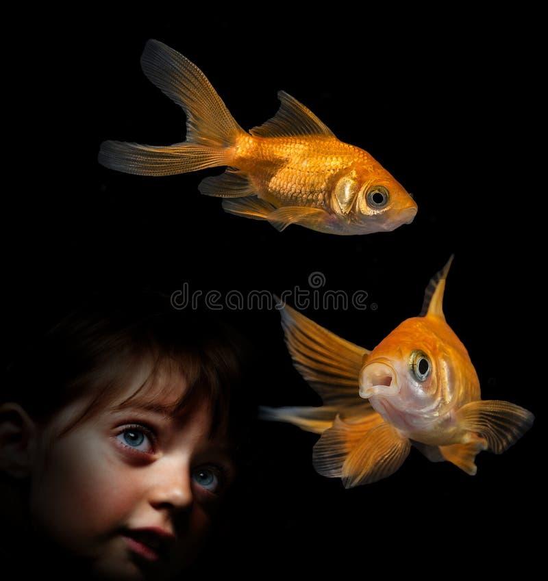 Meisje die achter aquarium op vissen kijken stock afbeeldingen